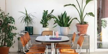 Zuiveren kamerplanten écht de lucht en maken ze ons gelukkig?