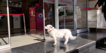 Trouwe hond wacht zes dagen lang op baasje bij ziekenhuis