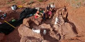'Fossiel van 's werelds grootste dinosaurus gevonden'