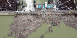 Serviërs starten schoonmaak van verontreinigd meer