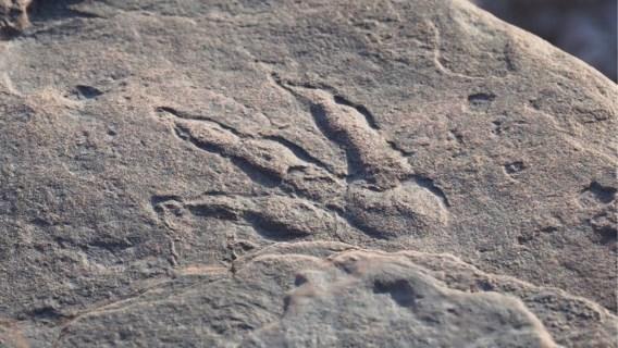4-jarig meisje ontdekt 220 miljoen jaar oude pootafdruk dinosaurus