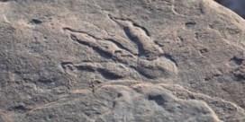 Vierjarig meisje ontdekt dinospoor