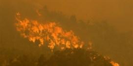 Dertigtal huizen in vlammen opgegaan bij Australische bosbranden
