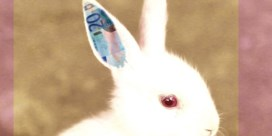 Waarom witte konijnen een riskante bedoening blijven
