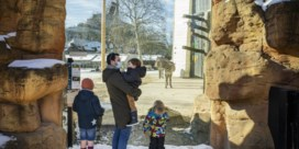 De zoo, meer dan een dierentuin
