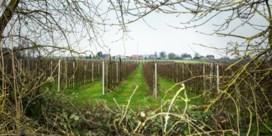 Betaal de boer om CO2 in zijn grond te steken