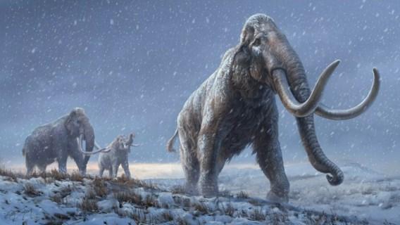 Miljoen jaar oud mammoet-dna uit kiezen verkregen