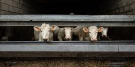 Alleen minder koeien kunnen ons redden