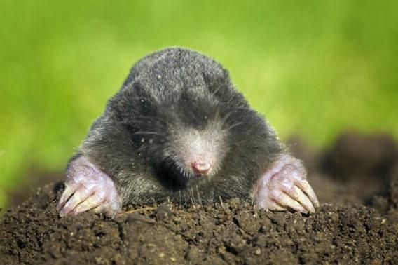 Zoek de mol (en meld het aan Natuurpunt)