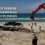Stranden gesloten na 'één van ergste milieurampen ooit' in Israël