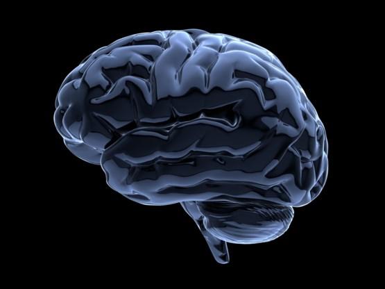 Brein geneigd tot extremisme heeft moeite met nieuwe informatie