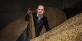 Crevits stimuleert boeren om meer linzen en kikkererwten te telen