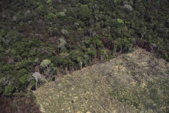 Stukken Amazonewoud illegaal te koop op Facebook