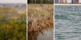 De bossen, de venen, de zee: hoe ze ons van CO2 afhelpen
