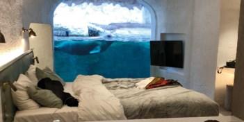 Droomplek | Slapen bij de walrussen in Pairi Daiza