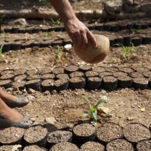 Guatemalteekse boeren moeten kiezen: verhongeren of migreren