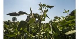 Gezocht: duizend tuinen om soja te telen