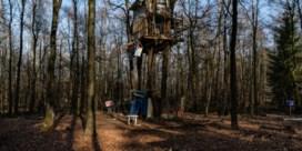 'Zadisten' leven al half jaar in boomhutten in bezet bos in Aarlen
