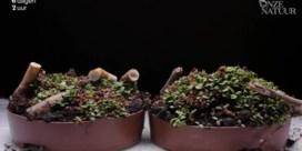 Timelapse toont aan hoe schadelijk peuken zijn voor planten