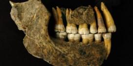 Laatste neanderthalers waren dan toch geen Belgen
