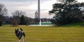 'Honden van Biden moeten Witte Huis verlaten na bijtincident'