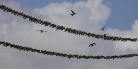Verwachting voor vannacht: een zwerm zangvogels