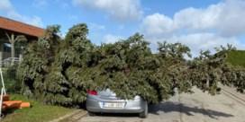 Ruim 120 oproepen voor stormschade aan Westkust en in Westhoek
