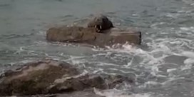 Uitzonderlijke waarneming in Ierland: walrus gespot aan kust