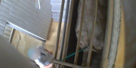 Slachthuis Verbist beboet ondanks nietigverklaring undercoverbeelden Animal Rights