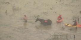 Huis drijft weg en dieren zitten vast door overstromingen in Australië