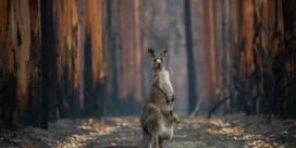 Rook Australische bosbranden ging door het plafond