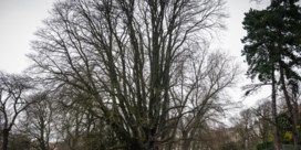 'Een boom kan perfect sterven zonder deingreep van mensen'