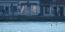 Bruinvissen gespot in Venetiaanse kanalen