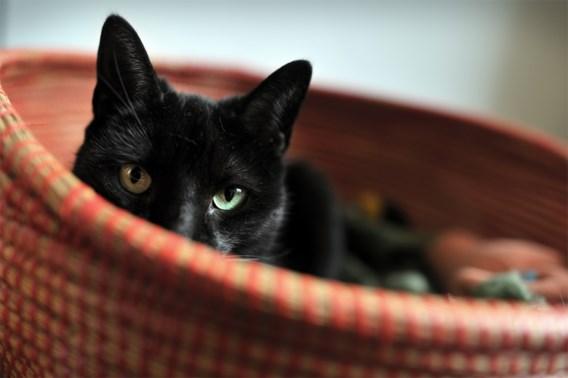 Grote Coronastudie polst nu ook naar symptomen bij huisdieren