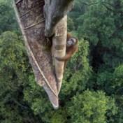 De wereld verliest weer meer bos, maar Indonesië brengt hoop