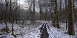 Aprilse grillen (met sneeuw)