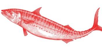 Takeaway Raionnoko : 'Onberispelijk vers, maar iets te veel rauwe vis'