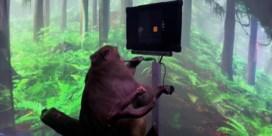 Makaak speelt spel via hersenimplantaten