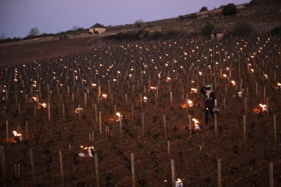 Franse wijnboeren vrezen 'magerste oogst in 40 jaar'