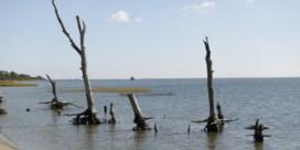 Oprukkend zout water doet spookbossen ontstaan