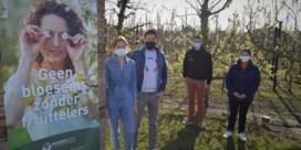 Boerenbond zet lokale fruittelers in de kijker met bloesemactie