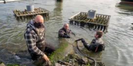 Biologen UAntwerpen speuren naar slakken en garnalen in havendokken