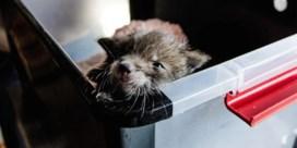 Twee vosjes binnengebracht in opvangcentrum