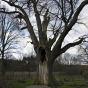 Het is ingewikkeld, de relatie tussen mensen en bomen