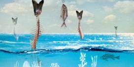 Doet de Netflix-docu Seaspiracy u terecht mindervis eten?