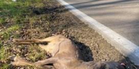 Steeds meer aangereden wild door toename van coronawandelaars