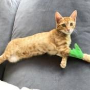 Ziekteverzekering voor hond of kat