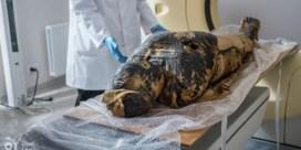 Zwangere mummie doet egyptologen versteld staan