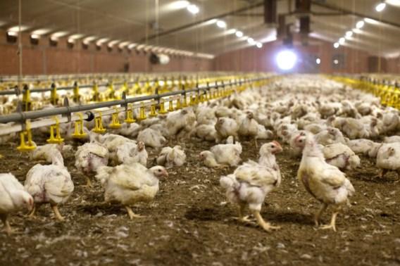 Vlaanderen zet landbouw op streng stikstofdieet