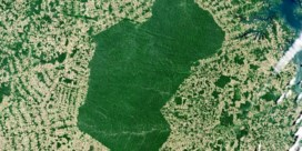 Peking strooit met geld voor ontbossers